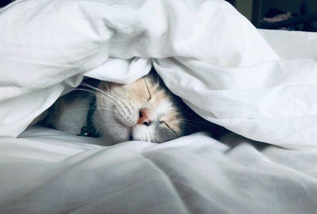 hittegolf-slapen